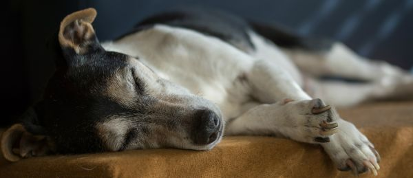 Caring for a senior pet