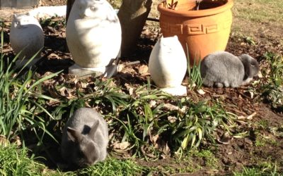 Thumper's Story