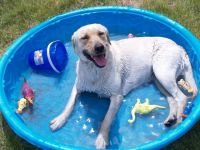Tips to keep your pet COOL over summer
