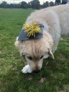Puppy School Graduates December 2018