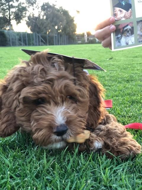 Puppy School Graduates April 2019