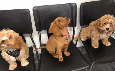 Puppy Graduates June 2019